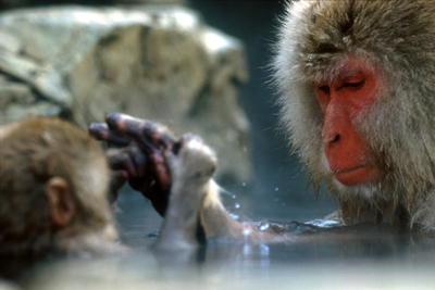 Monkey_bath_for_2_web